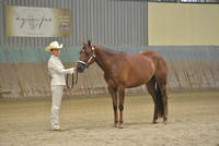 NOVICE AMATEUR THREE YRS AND OVER GELDINGS